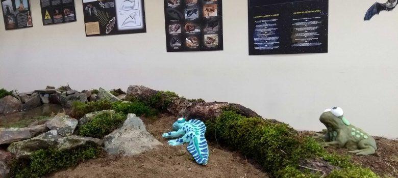 Exposición 'Fauna Nocturna