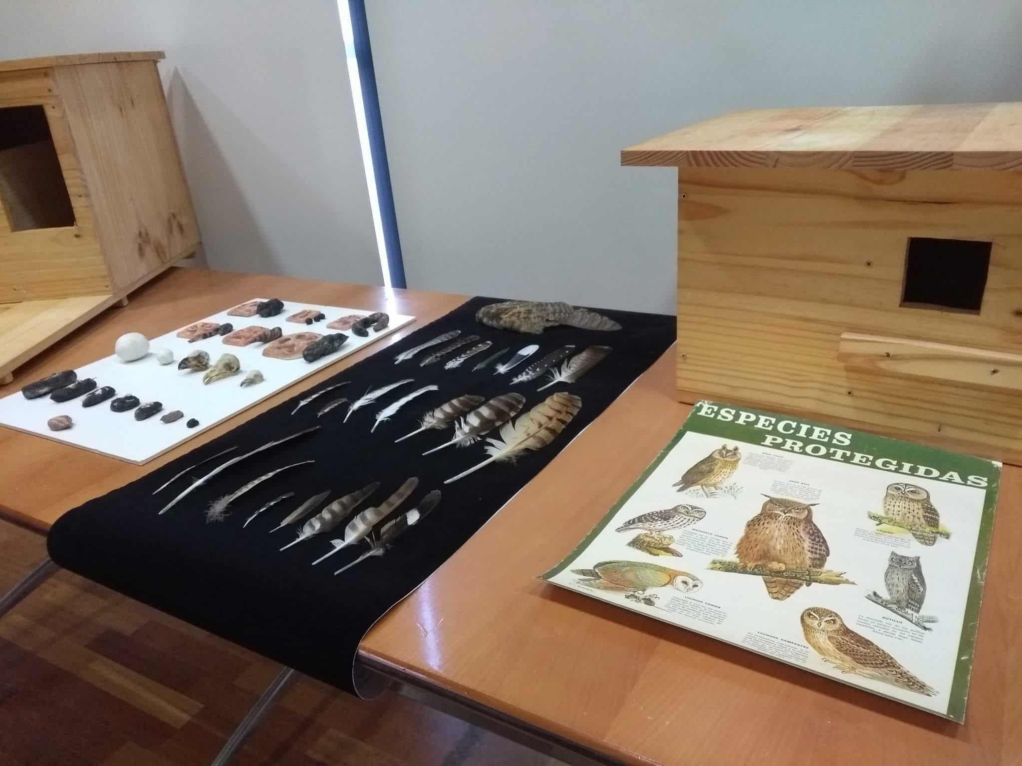 Exposición 'Fauna Nocturna de Ávila'
