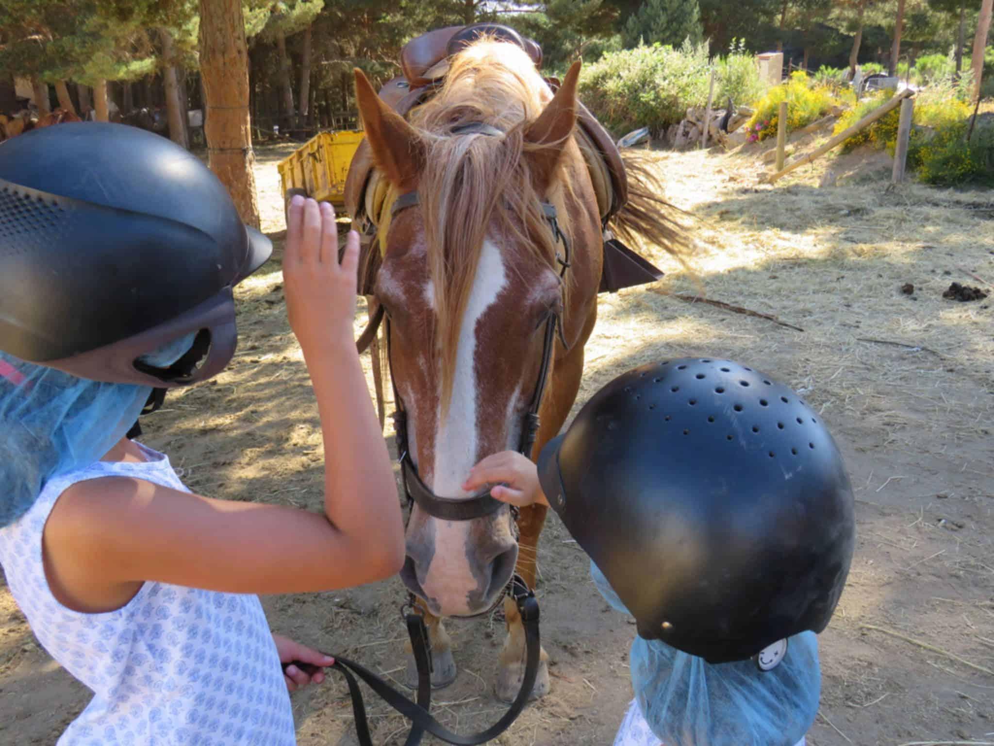 caballo gredos
