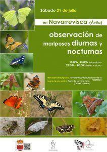 mariposas en el Alberche