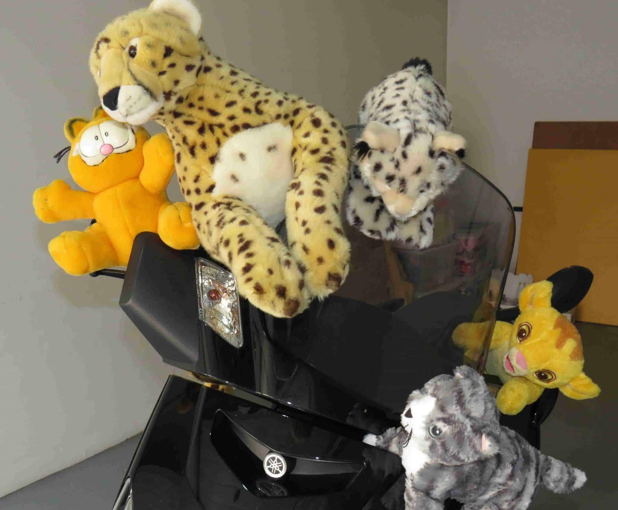 Gatos y motos