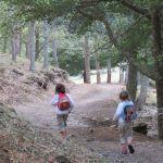 Castañar de El Tiemblo. Camino